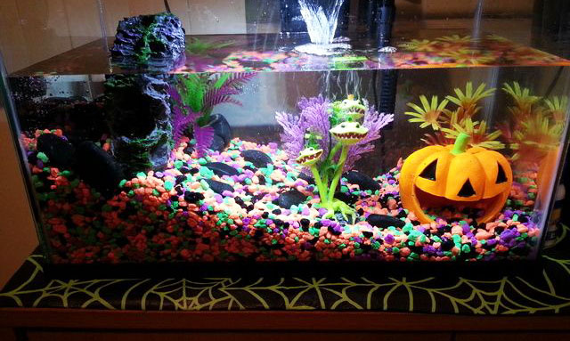 halloween-themed-aquariums-preview.