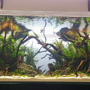 Aquascape Day 1